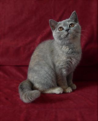 Poslední volná koťátka s PP k odběru
