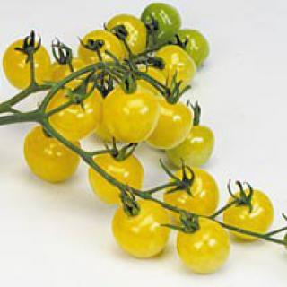 Rajče Snowberry - semena