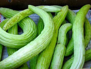 Okurka Tortarello Verde Barese - semena