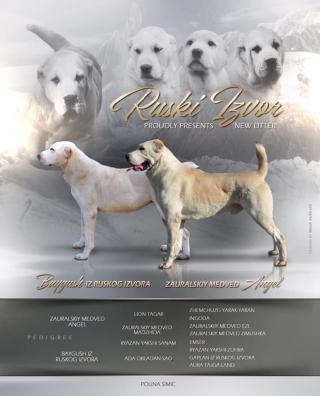 Středoasijský pastevecký pes štěňata