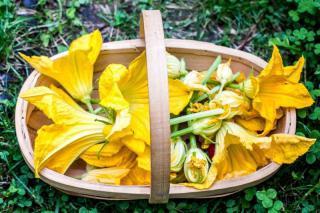 Cuketa Zucchini da Fiore - semena