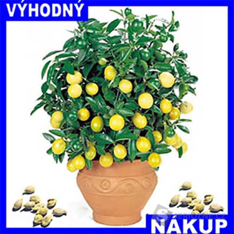 Citrusovník Lemon - domácí pěstění - Semínka 5Ks