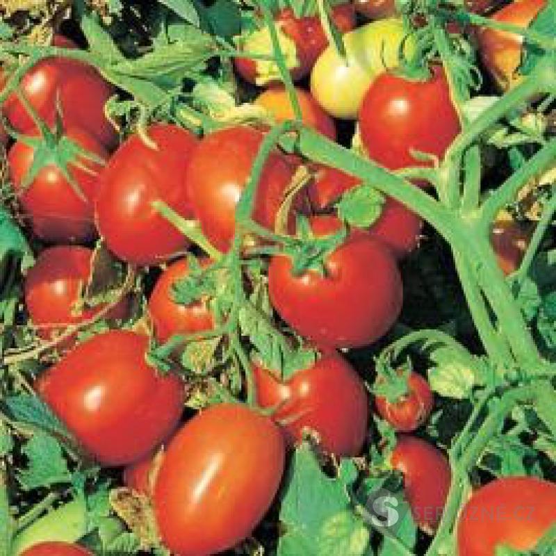Rajče Napoli - semena