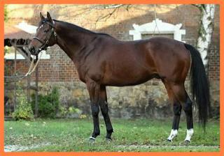 Prodej plnokrevných koní