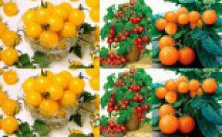 Rajčata truhlíková - set 3. druhů semen