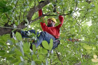 Kácení a prořezy stromů